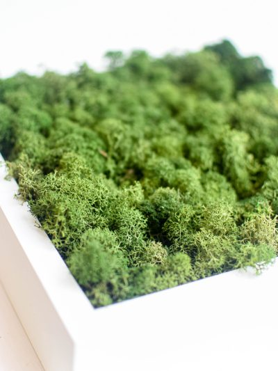 picture made from green moss in a white wooden frame