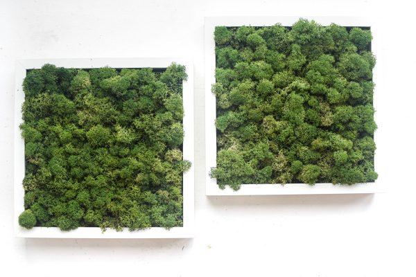 dva mechove obrazy v bilych drevenych ramech na zaveseni