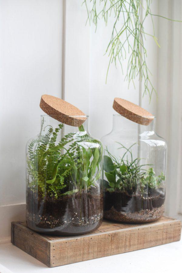 dve rostlinna teraria v designovych sklenenych nadobach
