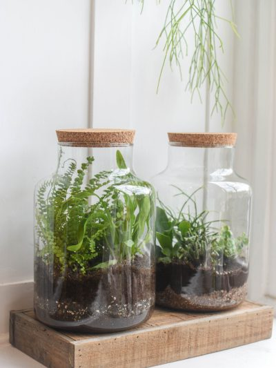 two glass jars with a cork stopper planted houseplants