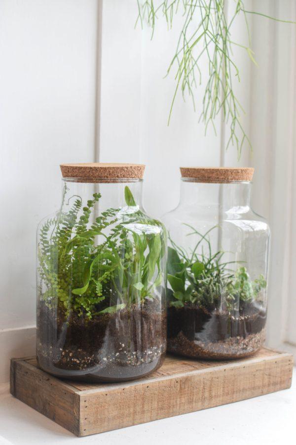 dve sklenene nadoby s korkovou zatkou osazene pokojovymi rostlinami