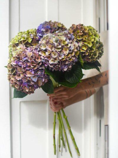 5 large long cut hydrangeas tied in a bouquet